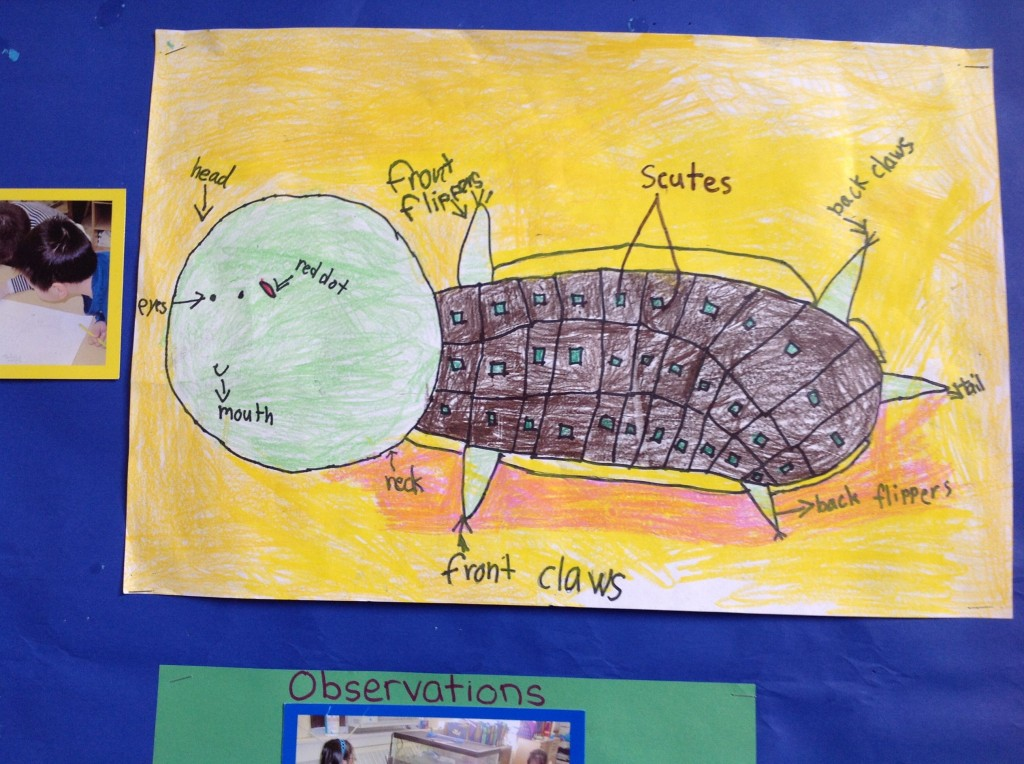 *turtle diagram 2
