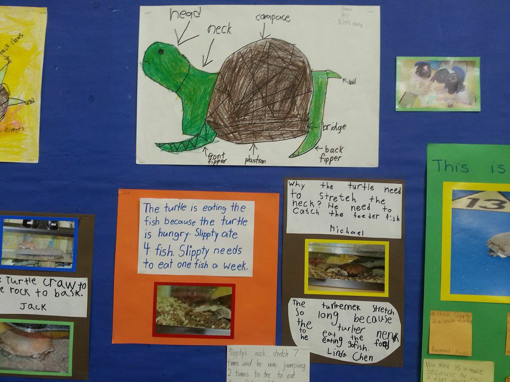 *turtle diagram
